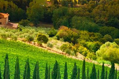 Two Recommended Wine Estates near Catania